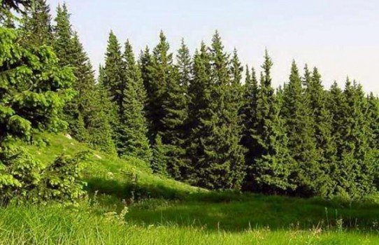 Малоритский лесхоз