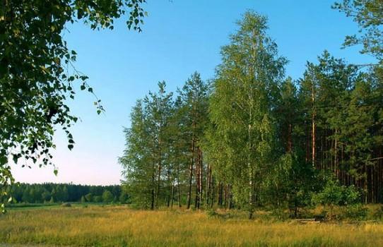 Полесский лесхоз