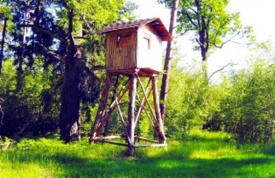 Речицкий опытный лесхоз