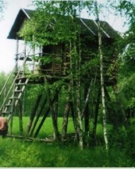 Бобруйский лесхоз