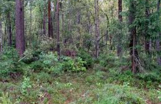 Телеханский лесхоз