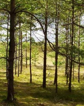 Жлобинский лесхоз