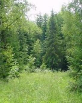 Ивацевичский лесхоз