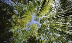 Запрет на посещение лесов в 72 регионах страны