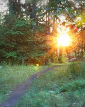 Барановичский лесхоз