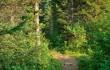 Комаринский лесхоз