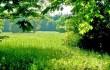 Дретунский лесхоз