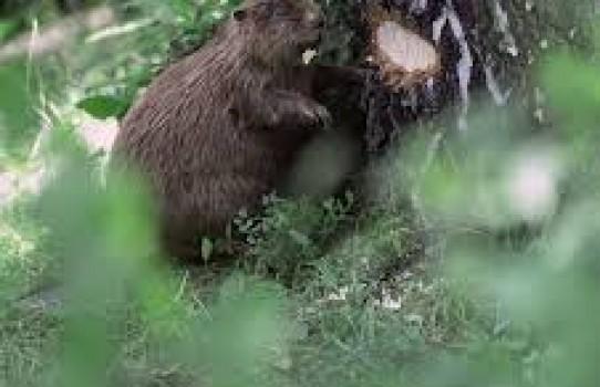Ляховичский лесхоз
