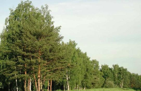 Лунинецкий лесхоз