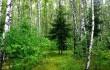 Оршанский лесхоз