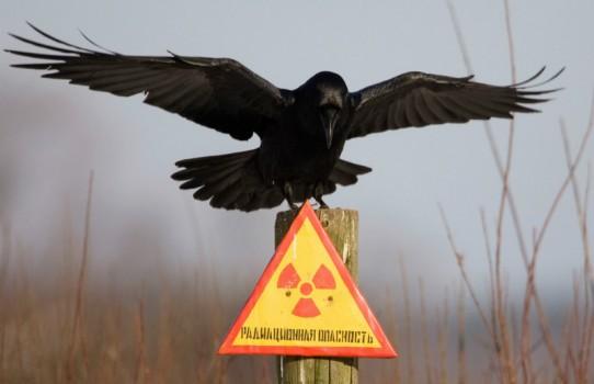 Полесский государственный радиационно-экологический заповедник (Зона отчуждения Чернобыльской АЭС)